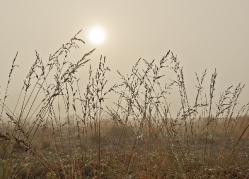 Autumn foggy morning