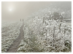 Frosty Morning. Norfolk_1