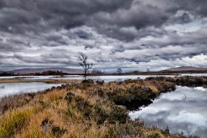 Landscape_5