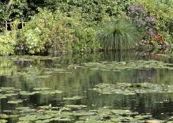 Monet garden (France)