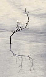 Shade on snow_1