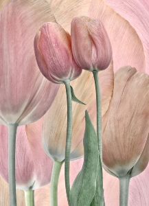 Associations Togetherness Tulips_1